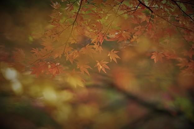 Photos: r_'19_10_31 7m2_shakugyouji-0076 (2)