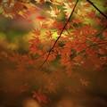 Photos: r_'19_10_31 7m2_shakugyouji-0079 (2)