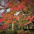 Photos: r_'19_10_31 M3_shakugyouji-0002 (2)