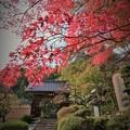 Photos: r_'19_10_31 M3_shakugyouji-0004 (2)