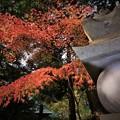 Photos: r_'19_10_31 M3_shakugyouji-0020 (2)