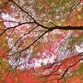 Photos: r_'19_10_31 M3_shakugyouji-0023 (2)