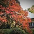 Photos: r_'19_10_31 M3_shakugyouji-0028 (2)