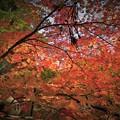 Photos: r_'19_10_31 M3_shakugyouji-0034 (2)