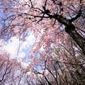 Photos: r_'20_04_28 5D_flourC-002 (2)