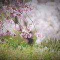 Photos: r_'20_04_27 7m3_undo-022 (2)