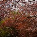 Photos: r_'20_04_29 5D_yuusou-086 (2)