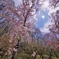 Photos: r_'20_04_28 5D_flourC-012 (2)