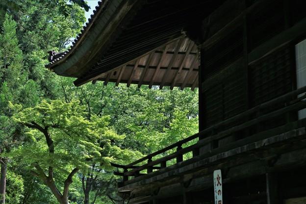 r_'20_06_08 M3_yakushi-036 (2)