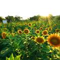 写真: あまりに西日が眩しくて