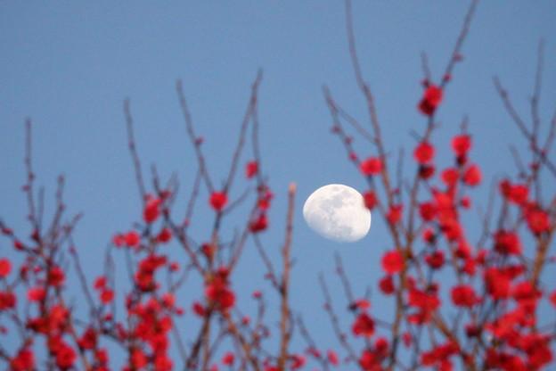 月見?花見?