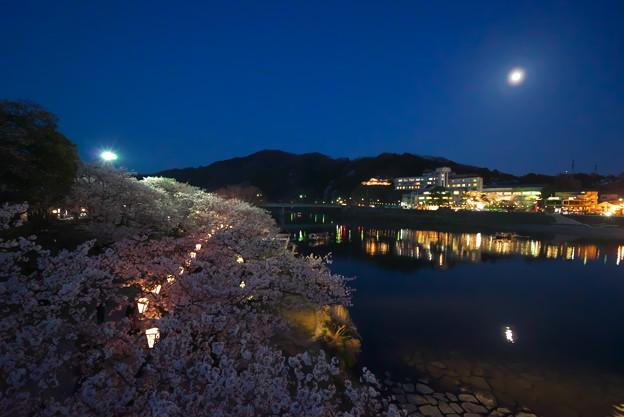 橋の上から夜桜見物