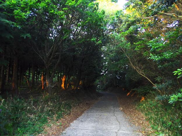 夕暮れの山路