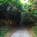 Photos: 夕暮れの山路