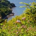 写真: 海の見える花園
