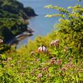 Photos: 海の見える花園