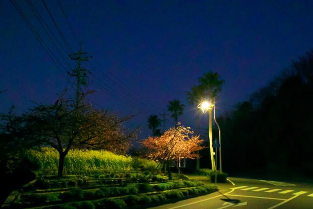 星降る街の街灯
