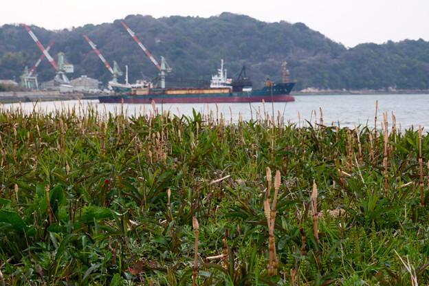 造船所の見える草原