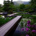 Photos: 城山花菖蒲園