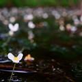Photos: 水面に広がる白
