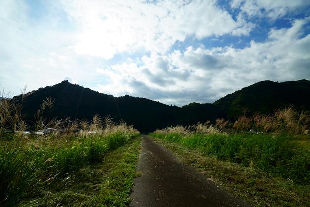 ススキの道