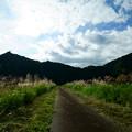 Photos: ススキの道