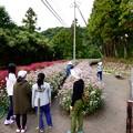Photos: 外入のフジバカマ園