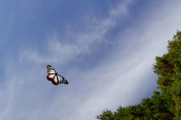 Photos: 青空を