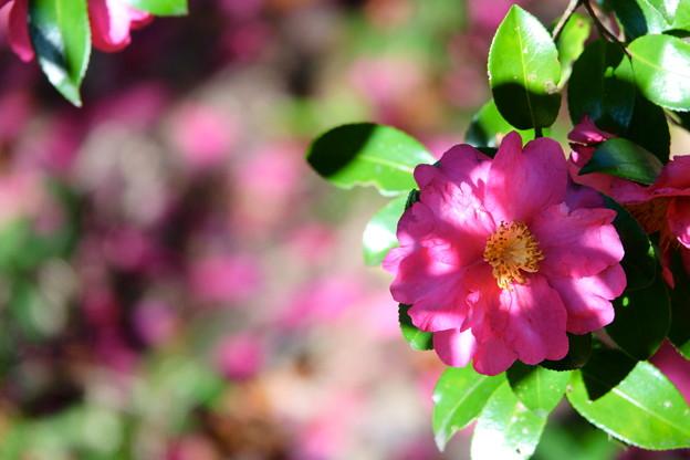 木漏れ日の花