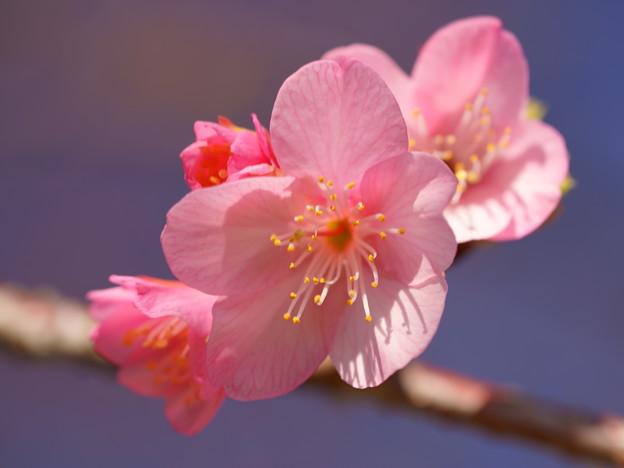 春の陽射しを浴びて? d(=^m^= )