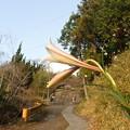Photos: 坂道に