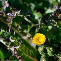 Photos: 花を守れ!