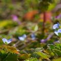 Photos: 春の野辺