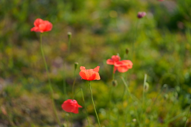 Photos: これも春色