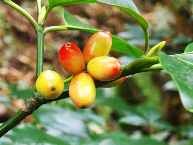 色づく木の実