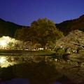 Photos: 夜桜見物