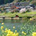 春の沈下橋