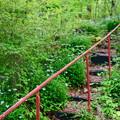 Photos: 山頂の花園へ