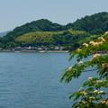 Photos: 海辺に