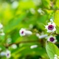 Photos: 夏の香りをお届けします d(=^m^= )