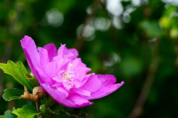 道端に咲くピンクの花