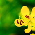 Photos: 道端に咲く黄色の花