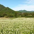 Photos: ソバ畑