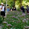 Photos: フジバカマ園 1