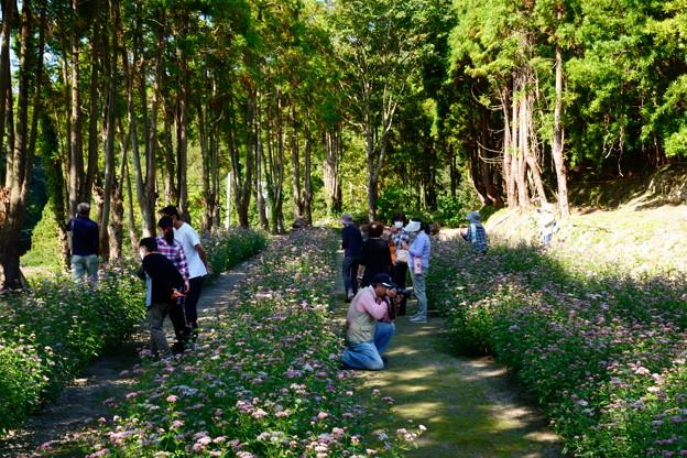 Photos: フジバカマ園 2