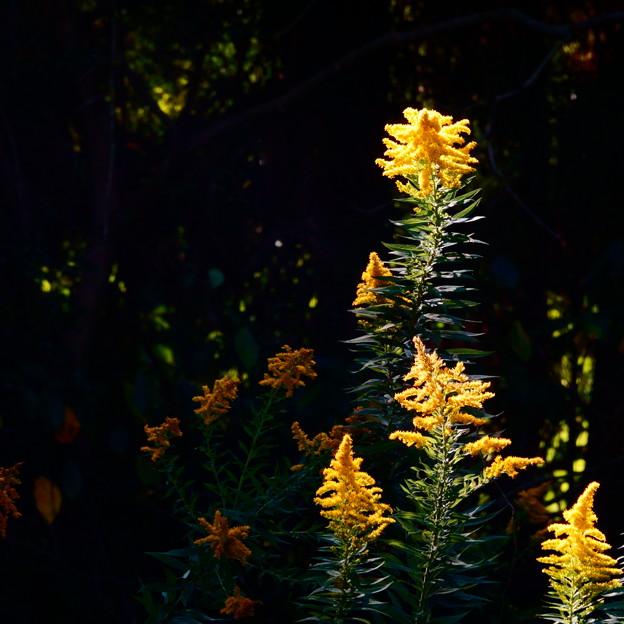 秋色に輝いて