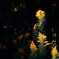 Photos: 秋色に輝いて