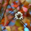 Photos: 白い実