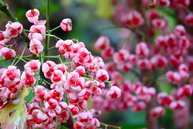 種の花 満開