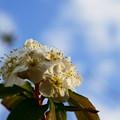 Photos: ??梅みたいな??